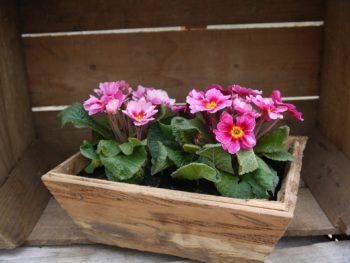 חנויות פרחים בראשון לציון